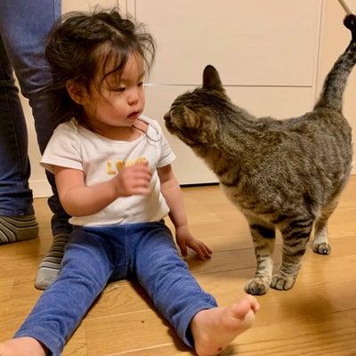2歳児と仲良しキジトラみいちゃんの記事に添付されている画像