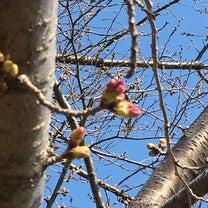 Spring  /Realの記事に添付されている画像