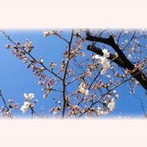 ビターチョコレート&ピンクの春メガネの記事に添付されている画像