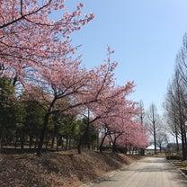 河津桜満開です。の記事に添付されている画像