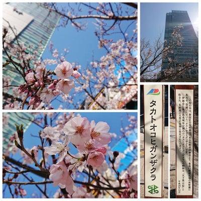 タカトオコヒガンザクラ @ 新宿の記事に添付されている画像