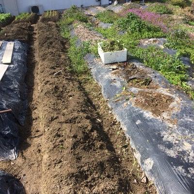 除草、残滓の片付け。今日は春分の日の記事に添付されている画像