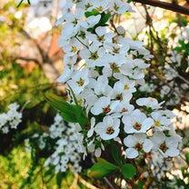 もうすぐ春ですねの記事に添付されている画像