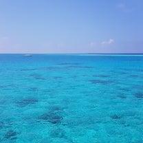 Local Island Discoveryの記事に添付されている画像