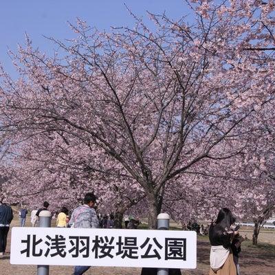 第5回坂戸にっさい桜まつりの記事に添付されている画像