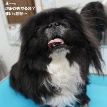 くろくん☆ そうえんくん☆ はなちゃん☆の記事に添付されている画像