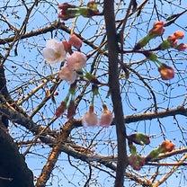 さくら咲く☆春真鯛が来たよーの記事に添付されている画像