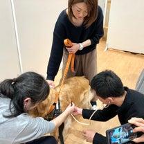 3/17(神戸)愛犬救命アドバイザーセミナーの様子の記事に添付されている画像