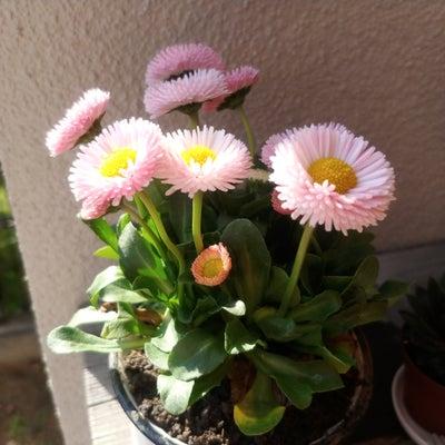 花いっぱいのフルート教室の記事に添付されている画像