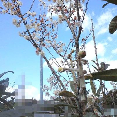 春らしい季節なので春らしいお話の記事に添付されている画像