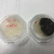bB 室内除菌消臭抗菌の記事に添付されている画像