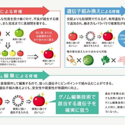 古代イスラエル❓純潔日本人などいない‼️の記事に添付されている画像