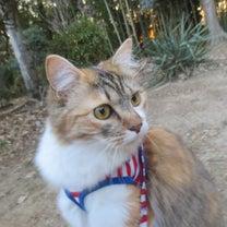 長毛三毛猫のみけちゃん、好奇心を刺激される!!の記事に添付されている画像
