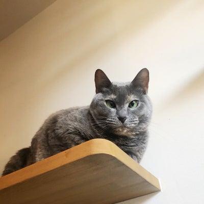 猫のために生きるべしっの記事に添付されている画像