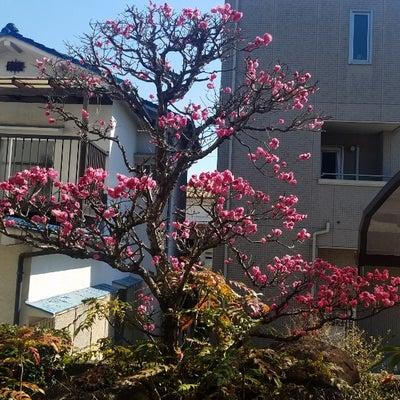 春はもう、すぐそこですね。の記事に添付されている画像