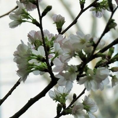 今日は春分の日の記事に添付されている画像
