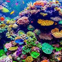 サンゴの森。の記事に添付されている画像