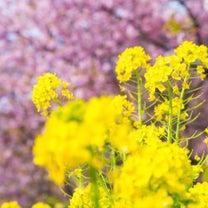 明日は「春分」〜そして「彼岸」の中日です〜の記事に添付されている画像