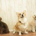 #犬の幼稚園の画像