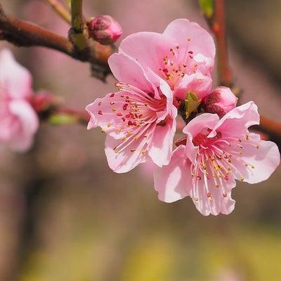春分を前にの記事に添付されている画像