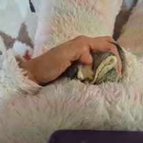 3月20日夜☆宅配便事件に娘の成長葛藤の記事に添付されている画像