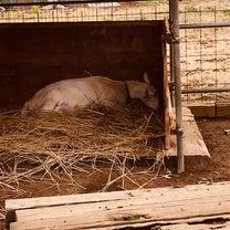 今日の山羊さんの記事に添付されている画像