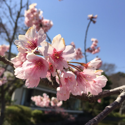 お墓参りと桜パフェ♫の記事に添付されている画像