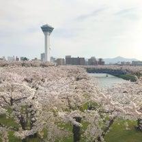 2018年黄金週間の函館は桜週間でしたの記事に添付されている画像