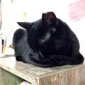 #保護猫カフェかぎしっぽの画像