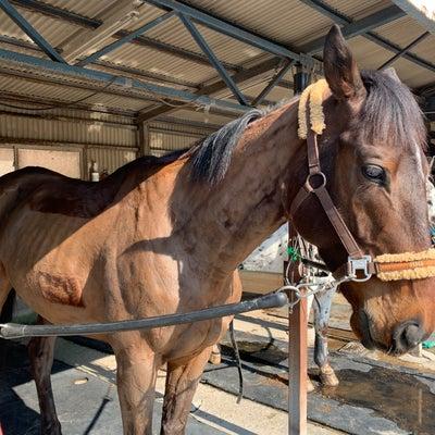 451鞍目〜伸びる馬の記事に添付されている画像