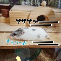 サプライズ☆の記事に添付されている画像