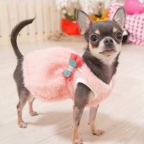 わんわんマルシェで購入したお洋服(*^ω^*)の記事に添付されている画像