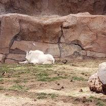 BEARIZONA・アリゾナの動物たちが放し飼いになっている自然動物園の記事に添付されている画像