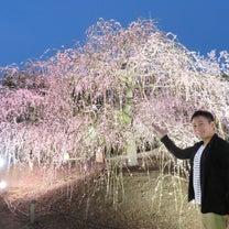【絶景庭園】日本最大級のしだれ梅の名所 鈴鹿の森庭園の「しだれ梅まつり」ライトアの記事に添付されている画像
