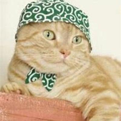 猫のおしゃべり/モラハラされる側の記事に添付されている画像