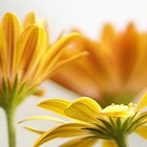 Flowers.ご予約状況の記事に添付されている画像