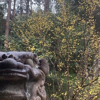 二十四節気春分の産土神社参拝の記事に添付されている画像