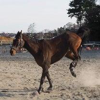 452鞍目〜障害55鞍目〜踏切練習の記事に添付されている画像