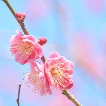 桜が咲く前にの記事に添付されている画像