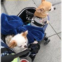 わんわんマルシェvol.22 @神戸ポートアイランドの記事に添付されている画像