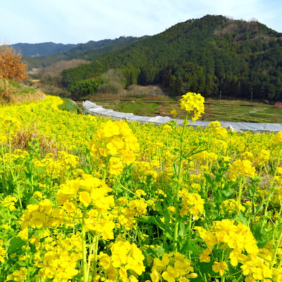 明日香村でのんびり♪の記事に添付されている画像