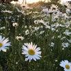 希望の…春