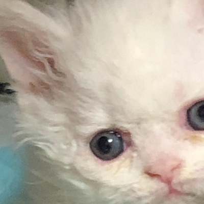 2月生まれの子猫たちの記事に添付されている画像