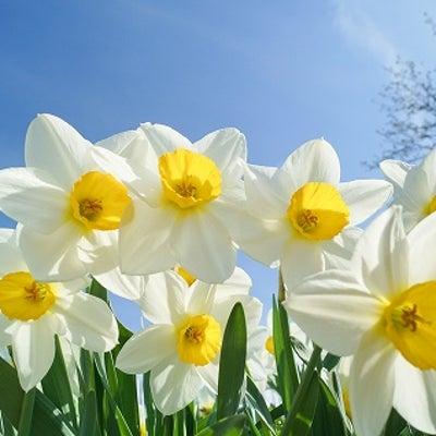 今日は、春分の日&満月のパワフルデーです!の記事に添付されている画像