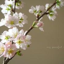 啓翁桜。の記事に添付されている画像