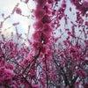 春分と満月~新しい視点で葛藤を創造の力へ~の画像