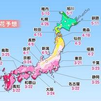 福井のソメイヨシノは3月末開花?一足先に花見気分で夜の街(笑)の記事に添付されている画像