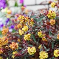 雨上がりの庭。の記事に添付されている画像