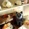 #坂の下の小さなお店SIROの画像