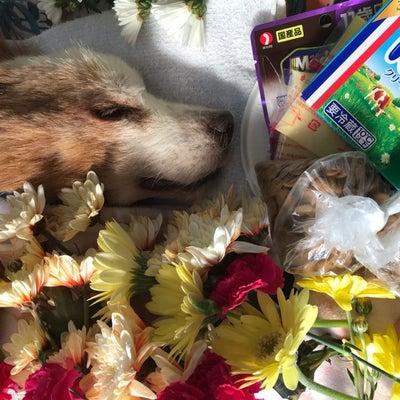 ラッキーの火葬とフリの説教と重度の花粉症の記事に添付されている画像